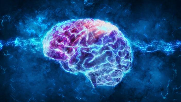 Des chercheurs démontrent que les « mini-cerveaux » humains se développent plus lentement que ceux des primates étudiés