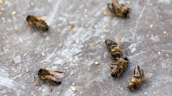 Requiem pour les insectes