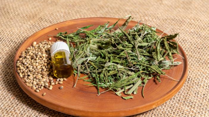 Cannabis terapeutica, un panorama poco uniforme