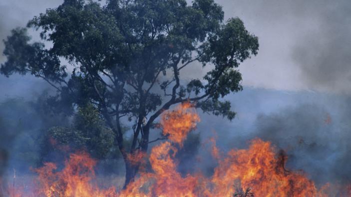 Buschbrände: Ausnahmezustand in Australien