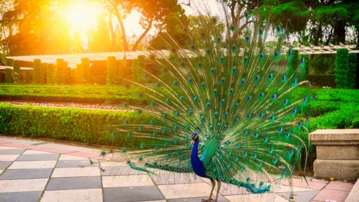 La fauna recoloniza la ciudad