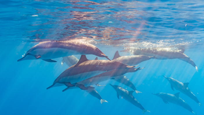 Los océanos podrían restaurar la vida marina para 2050