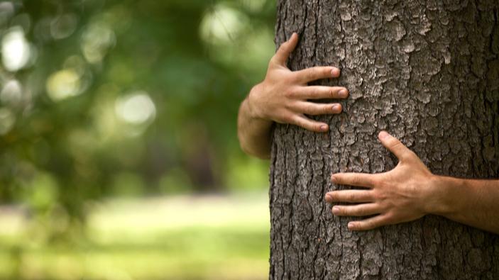 Islandia recomienda abrazar árboles durante el distanciamiento social
