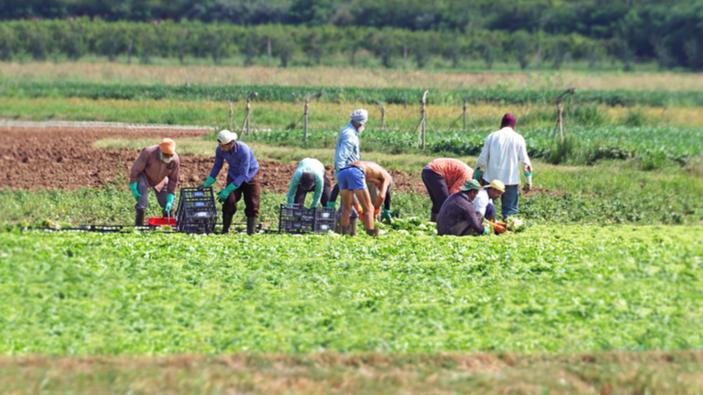 Agricoltura, si accendono le polemiche sulla proposta di regolarizzare gli immigrati