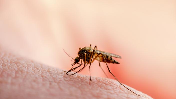 Científicos confían en un microbio para controlar la malaria