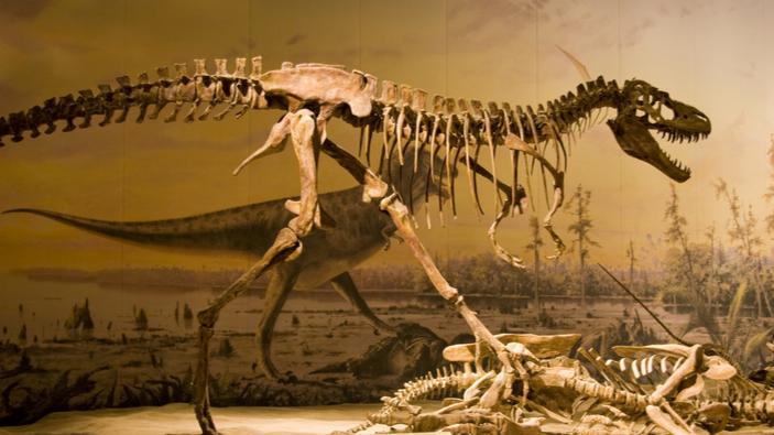 Un hombre, procesado tras entrar ilegalmente en una exposición de dinosaurios