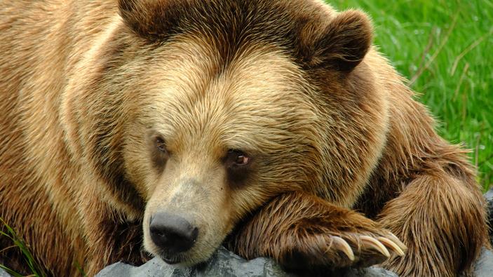 Un ours tué dans l'Ariège