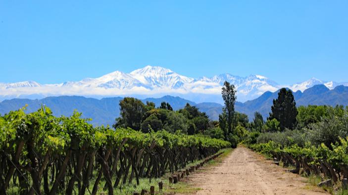 Los mejores vinos argentinos, según un experto británico