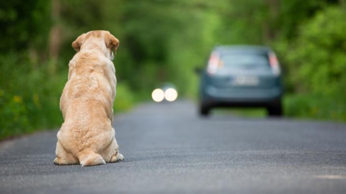 Aumenta el abandono de perros durante la desescalada