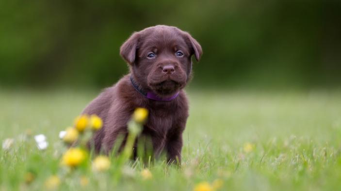 Ein Hundejahr gleich sieben Menschenjahre? Eine neue Studie widerspricht dieser Regel