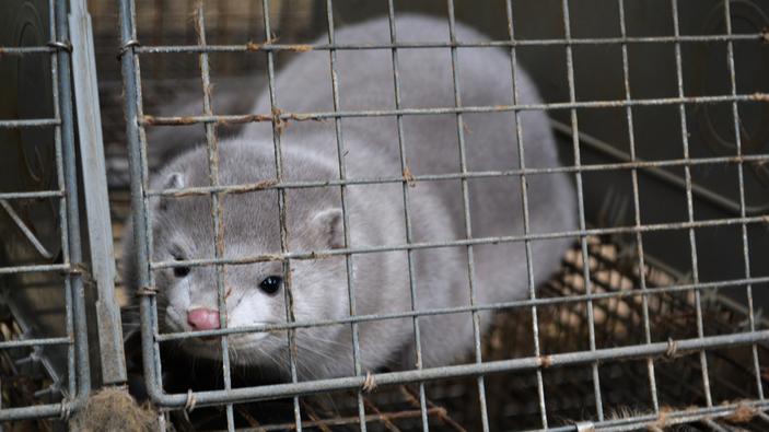 Transmisión de la covid-19 en animales