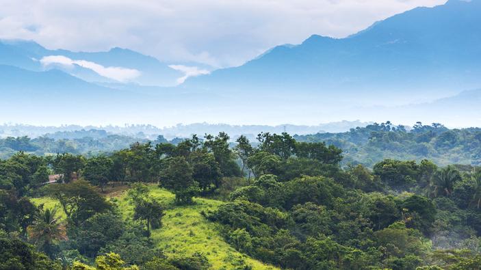 ¿Qué pasó con los proyectos de reforestación en América Latina?