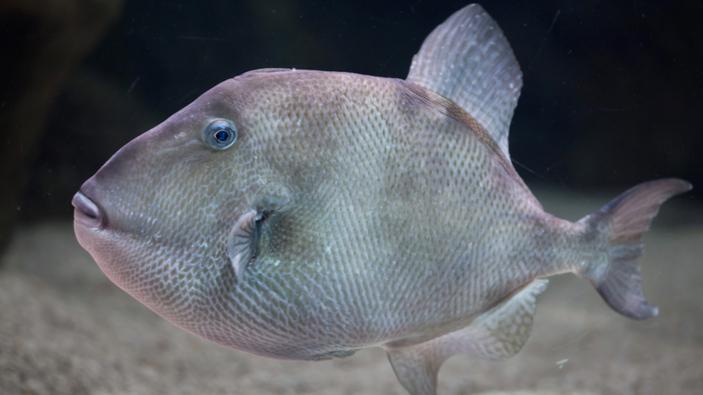Un mystérieux poisson mordeur attaque les baigneurs