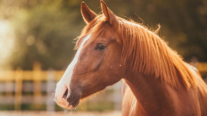 Costa Rica desarrolla tratamiento para la COVID-19 con anticuerpos equinos