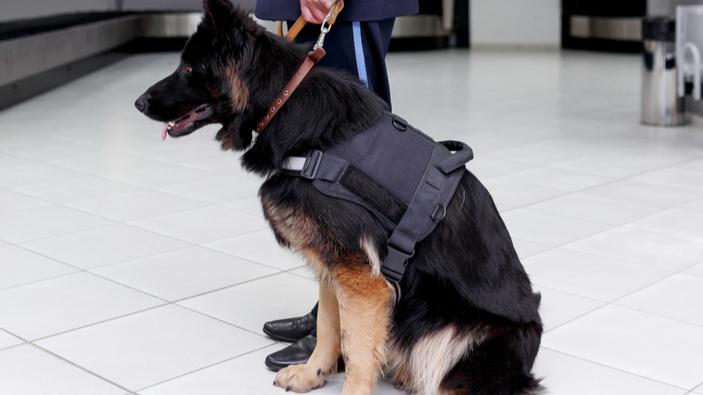 El aeropuerto Vantaa de Helsinki utiliza perros rastreadores para detectar el Covid