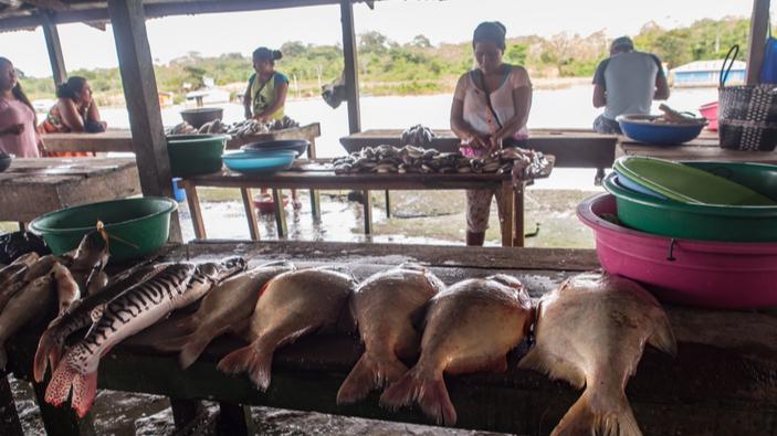 La cogestión de la pesca está trayendo igualdad de género a la Amazonía
