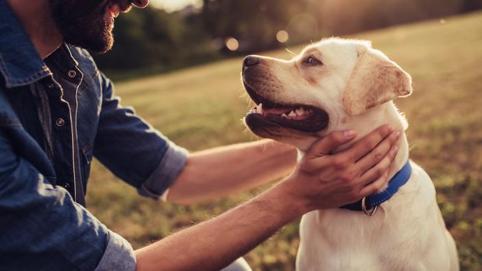 Un nuevo estudio confirma que los perros fueron domesticados antes que cualquier otra especie conocida