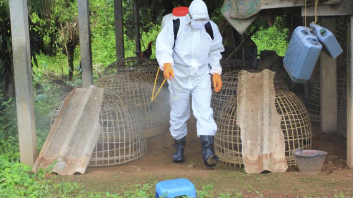 Risque élevé de grippe aviaire en France
