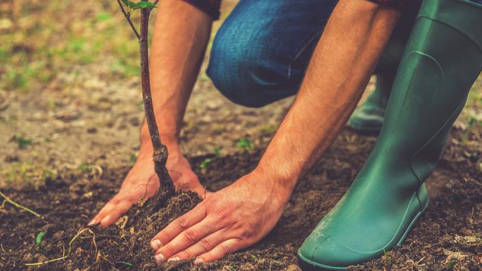 La France va planter 50 millions d'arbres