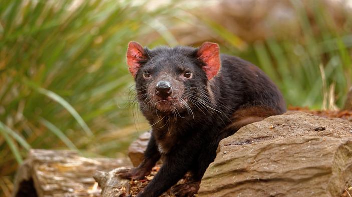 Zoológico descubre animales que brillan en la oscuridad