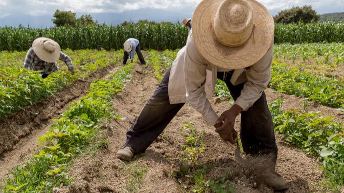 La realidad del trabajo esclavo en México