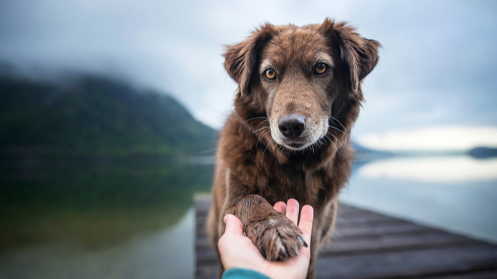 Una nueva teoría sobre la domesticación de los perros