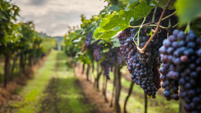 El vino argentino busca nuevos mercados