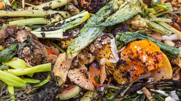 Jedes Jahr werden 900 Millionen Tonnen Lebensmittel weggeworfen
