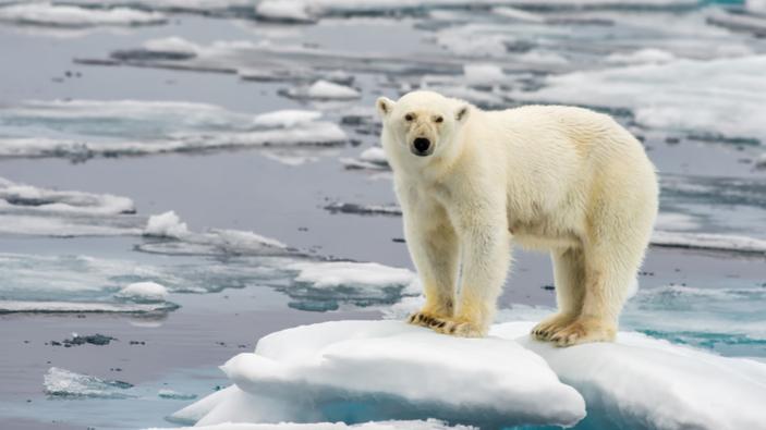 Gli scienziati hanno scoperto che il cambiamento climatico sta spostando l'asse terrestre