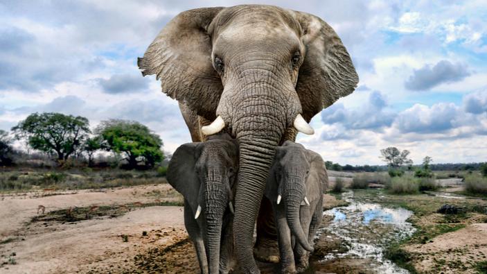 I mammiferi hanno sviluppato cervelli più grandi dopo eventi catastrofici e cambiamenti climatici