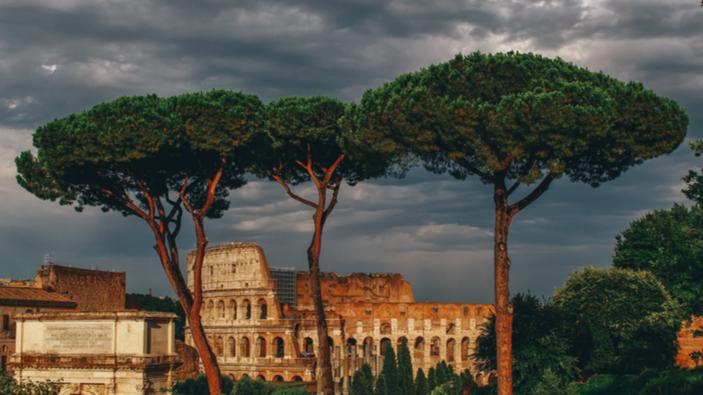 Un insetto minaccia la sopravvivenza dei pini di Roma