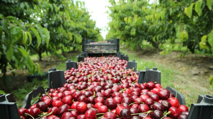 Il paradosso delle ciliegie