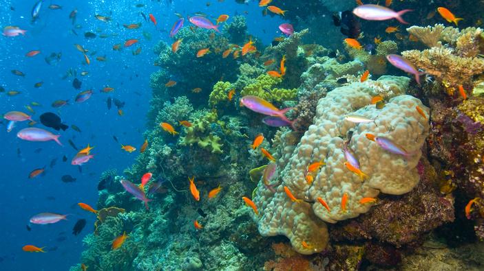 La Gran Barrera de Coral, ¿patrimonio amenazado de la Unesco?