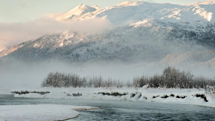Les dinosaures vivaient-ils toute l'année dans le nord de l'Alaska ?