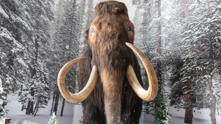 Los científicos recrean los desplazamientos diarios de un mamut de hace 17.000 años