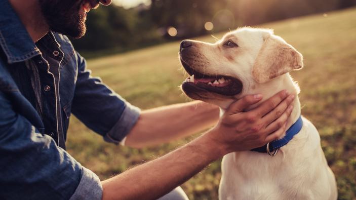 Su perro le quiere, pero… ¿entiende sus intenciones?