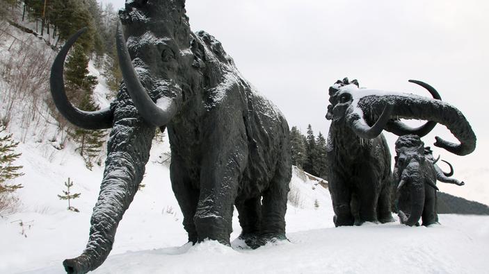 ¿Queremos que los mamuts lanudos vaguen de nuevo por la Tierra?