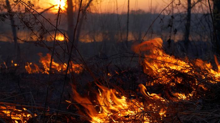 Los bosques de Siberia se consumen debido al calentamiento global
