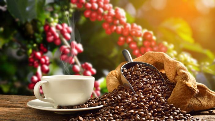 Cambiamenti climatici, arriva il caffè siciliano